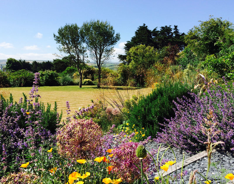 Beautiful garden borders at Tamarisk, a holiday house to rent in Rock, Cornwall