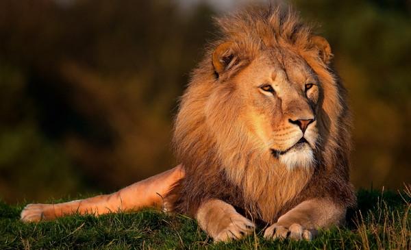 Иллюстрация к статье: Урок маркетинга и концентрации от укротителя львов!