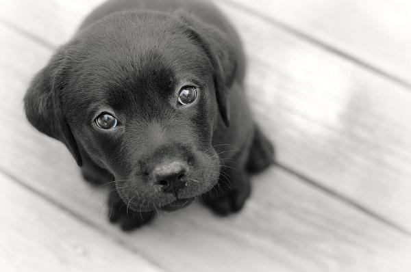 Дискриминация домашних животных