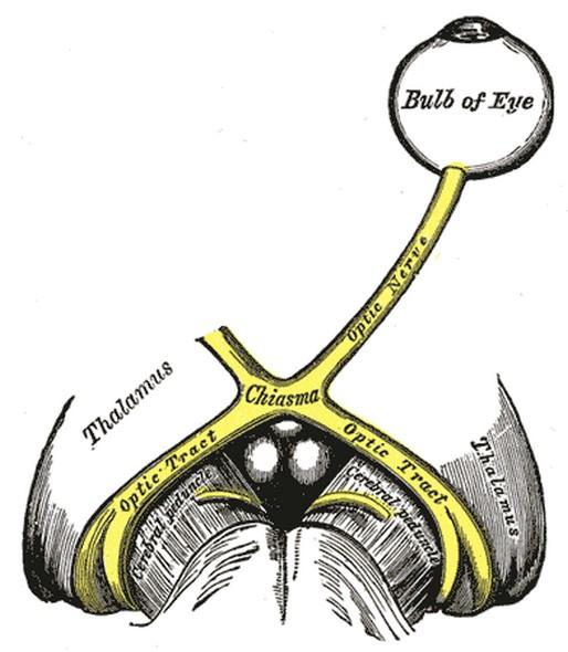 супрахиазматическое ядро
