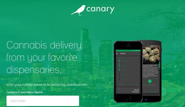 Иллюстрация к статье: Стартап Canary: законный способ заработать на медицинской марихуане