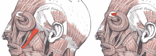Иллюстрация к статье: Как проводятся нейромаркетинговые исследования?