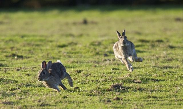 Иллюстрация к статье: Погоня за двумя зайцами: как расширение бизнеса влияет на эффективность