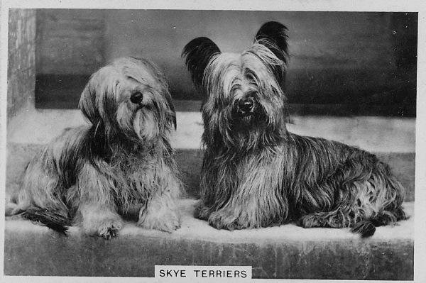 Иллюстрация к статье: Жестокий биомаркетинг: выживут ли викторианские собаки?