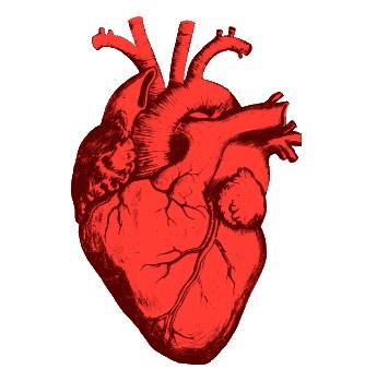 Иллюстрация к статье: Почему символ сердца ♥ выглядит именно так?