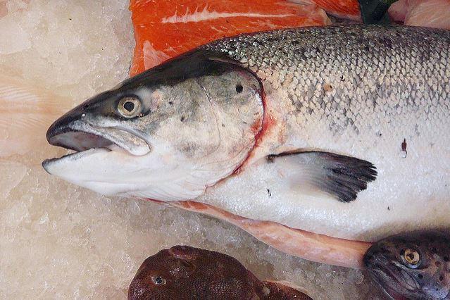 Иллюстрация к статье: Как мертвый лосось чуть было не погубил нейромаркетинг?