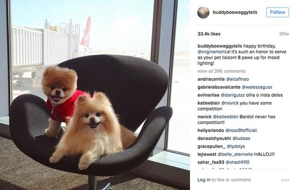 собачки позируют на фоне самолета авиакомпании Virgin America