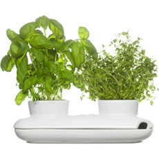 Duo Herb Pot