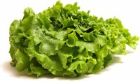Digital lettuce