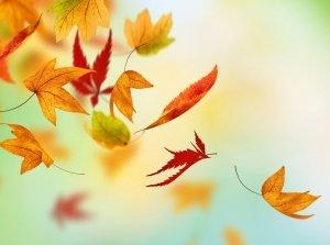 Autumn Awakening, Fota Island Spa Co. Cork