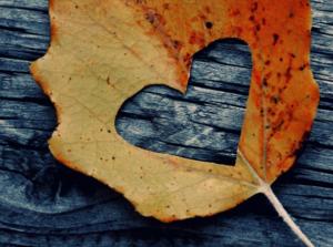 Soothing Autumn Treats, Osprey Spa Co. Kildare