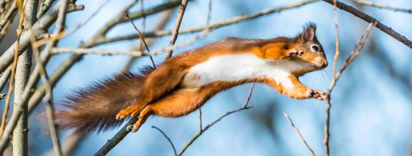 Red squirrel at Hauxley Nature Reserve by Nicholas Box
