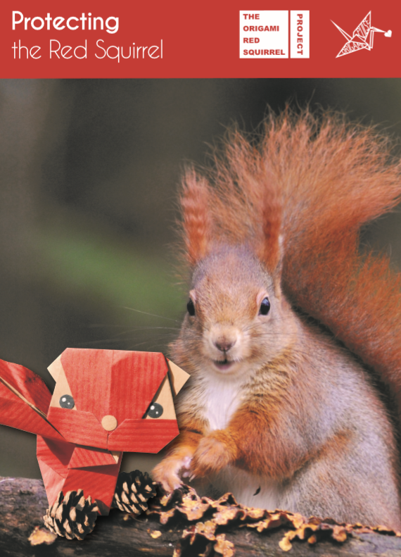 Red Squirrel Origami Project