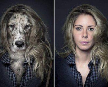 test-que-raza-de-perro-eres