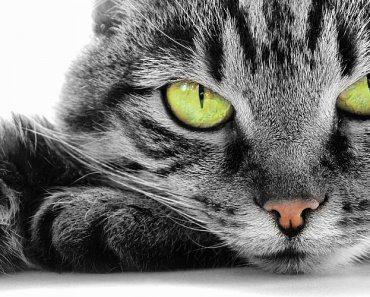 test-eres-un-verdadero-amante-de-los-gatos