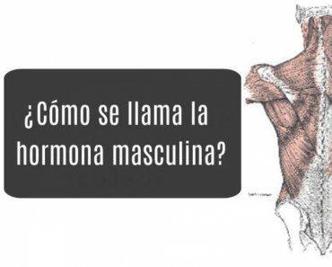 test-anatomia-masculina