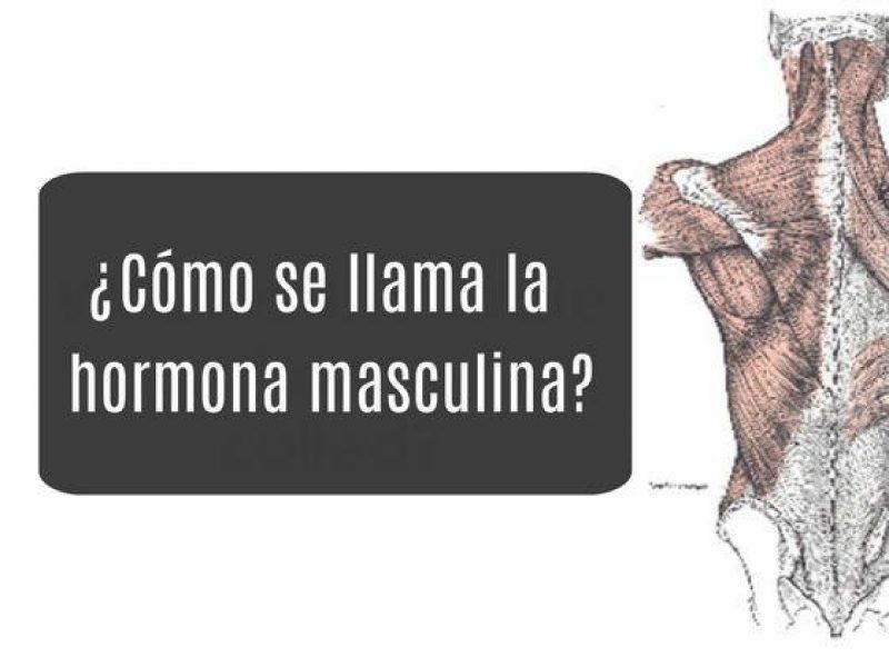 Cuanto sabes de anatomía masculina?