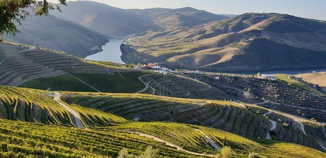 Douro wijnvallei