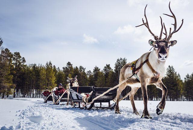 Finland, Rendiertocht in Lapland