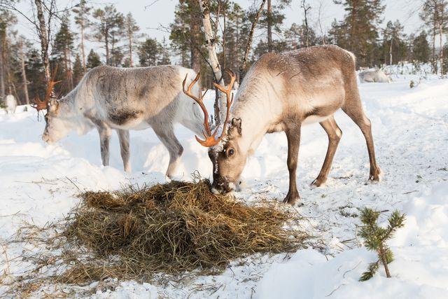 Finland, Lapland