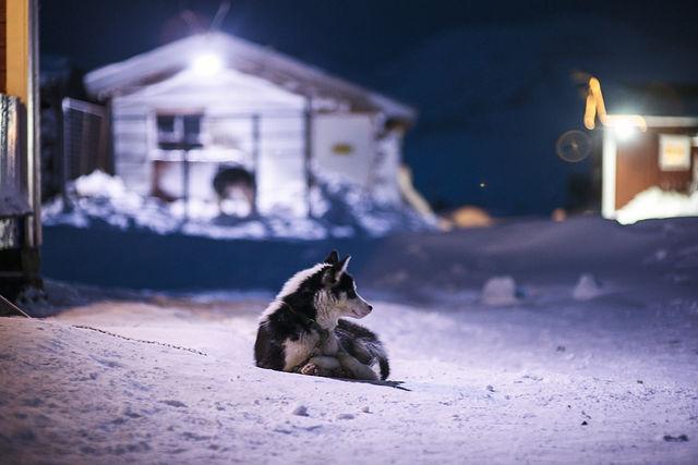 Husky op Spitsbergen