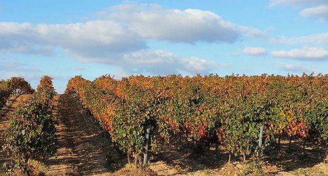 Wijngaarden van la Rioja