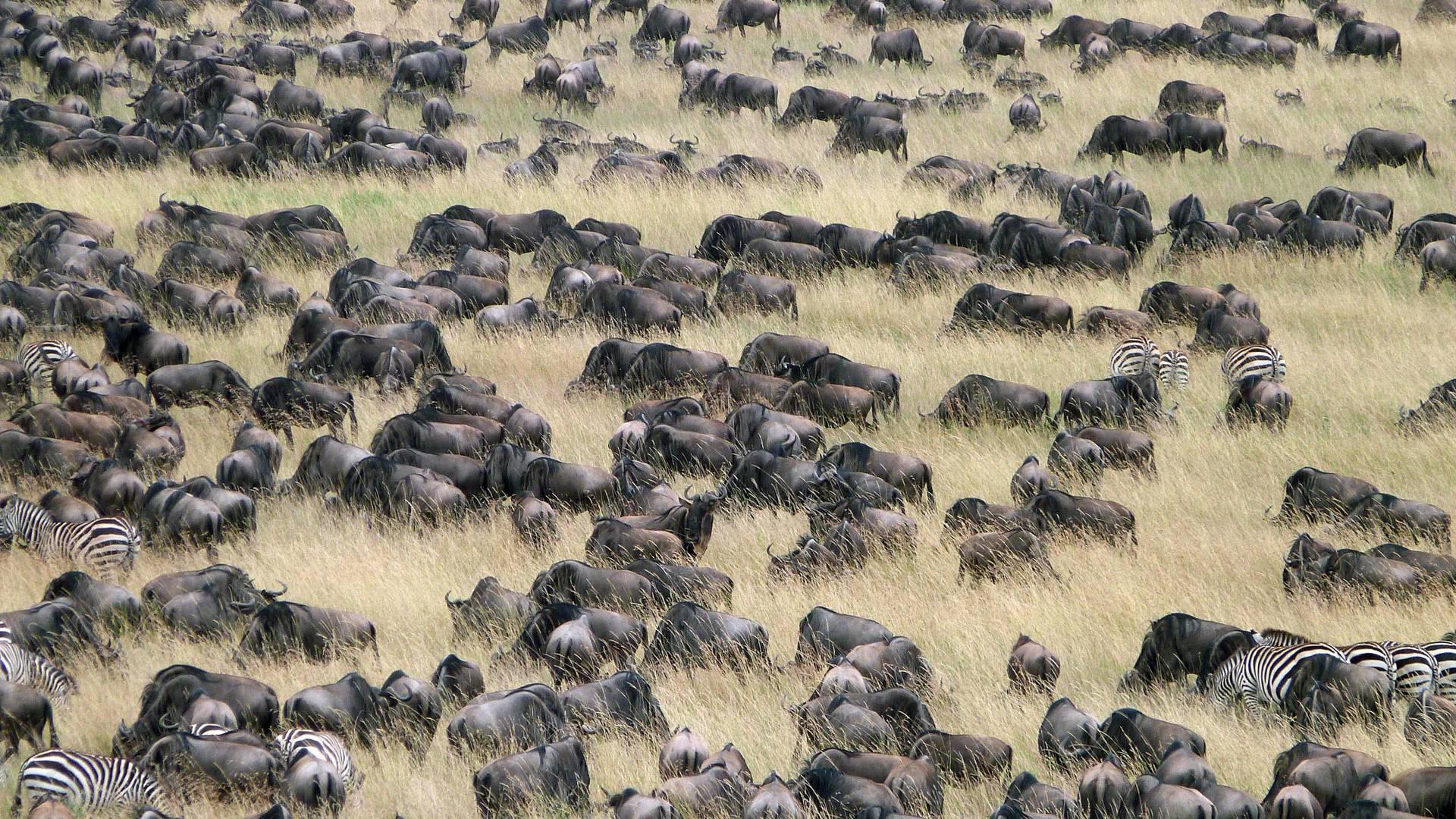 Migratie in de Serengeti