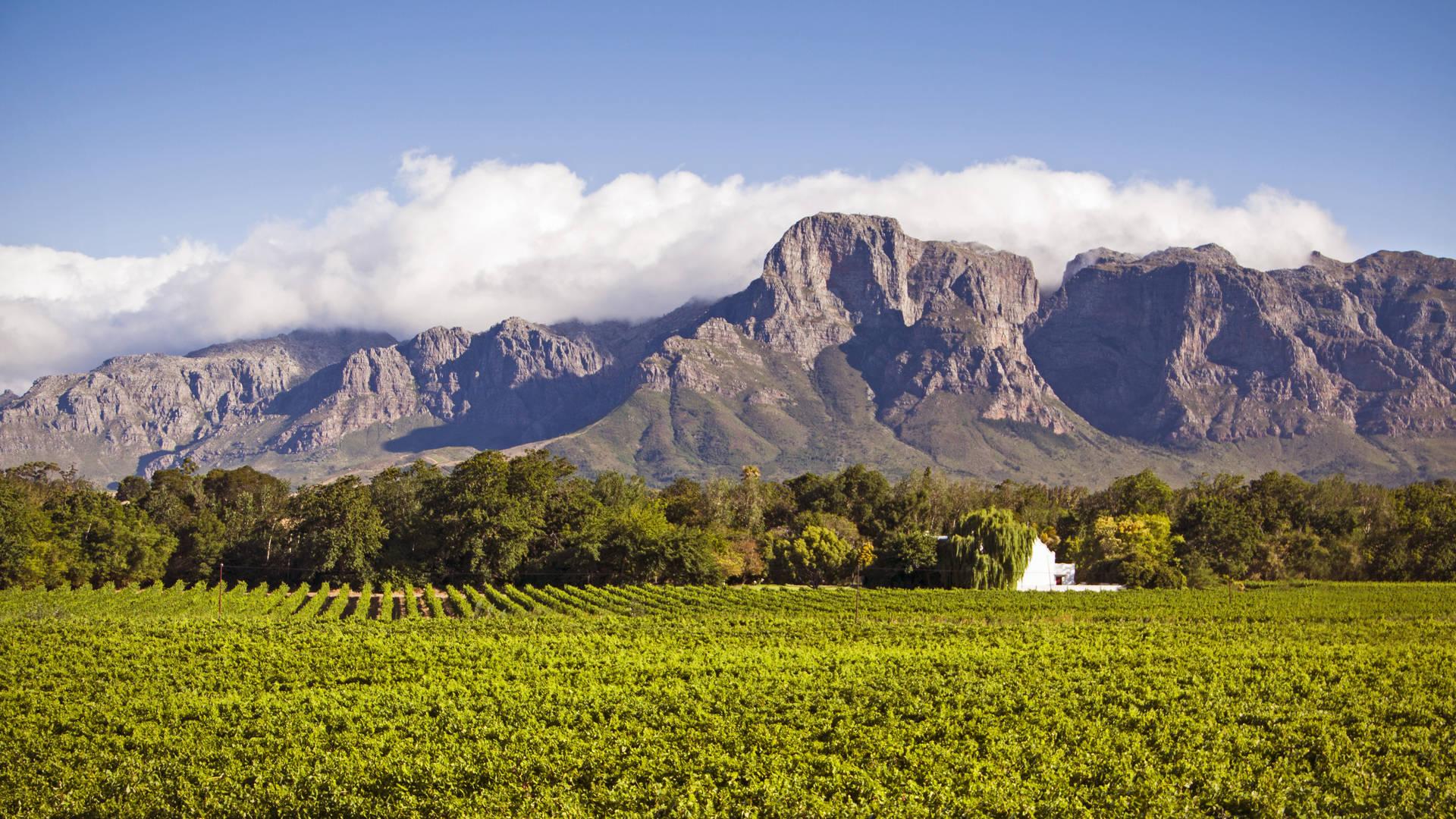Wijngaarden van Stellenbosch