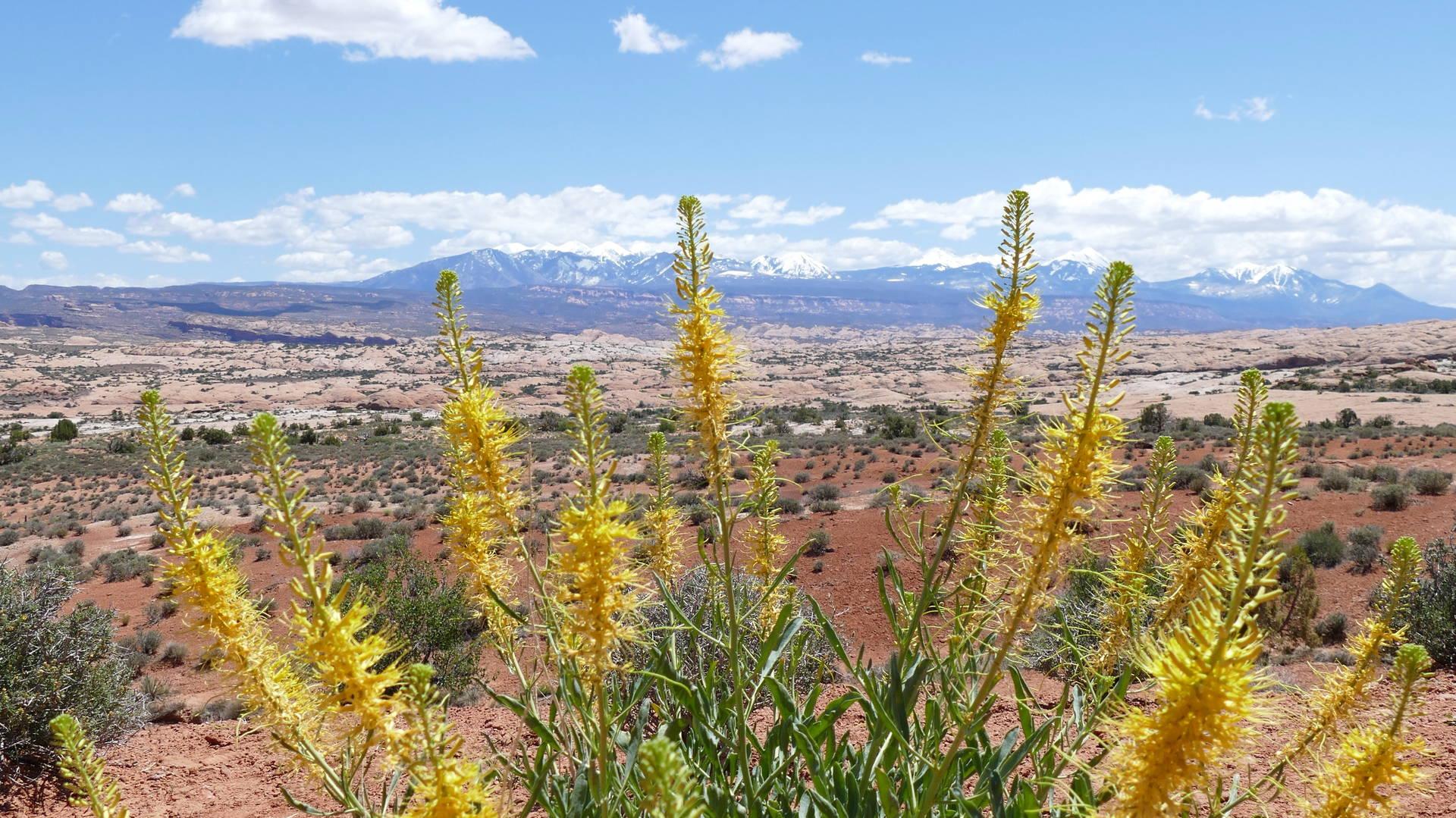 Uitzicht op la Sal Mountains in Arches NP