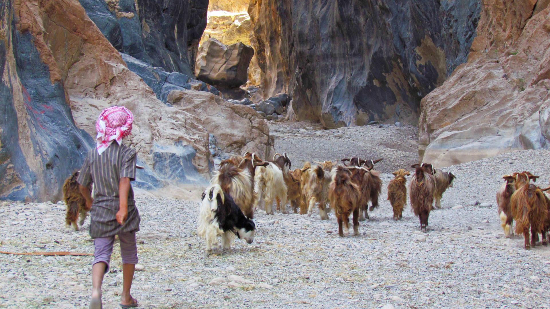 Herdertje met zijn geiten in de Snake Canyon