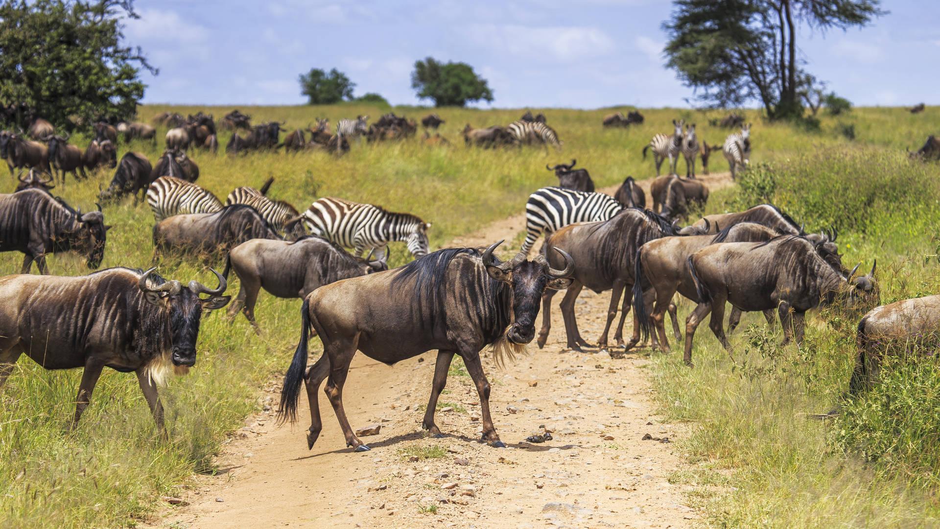 Grote Migratie in de Serengeti