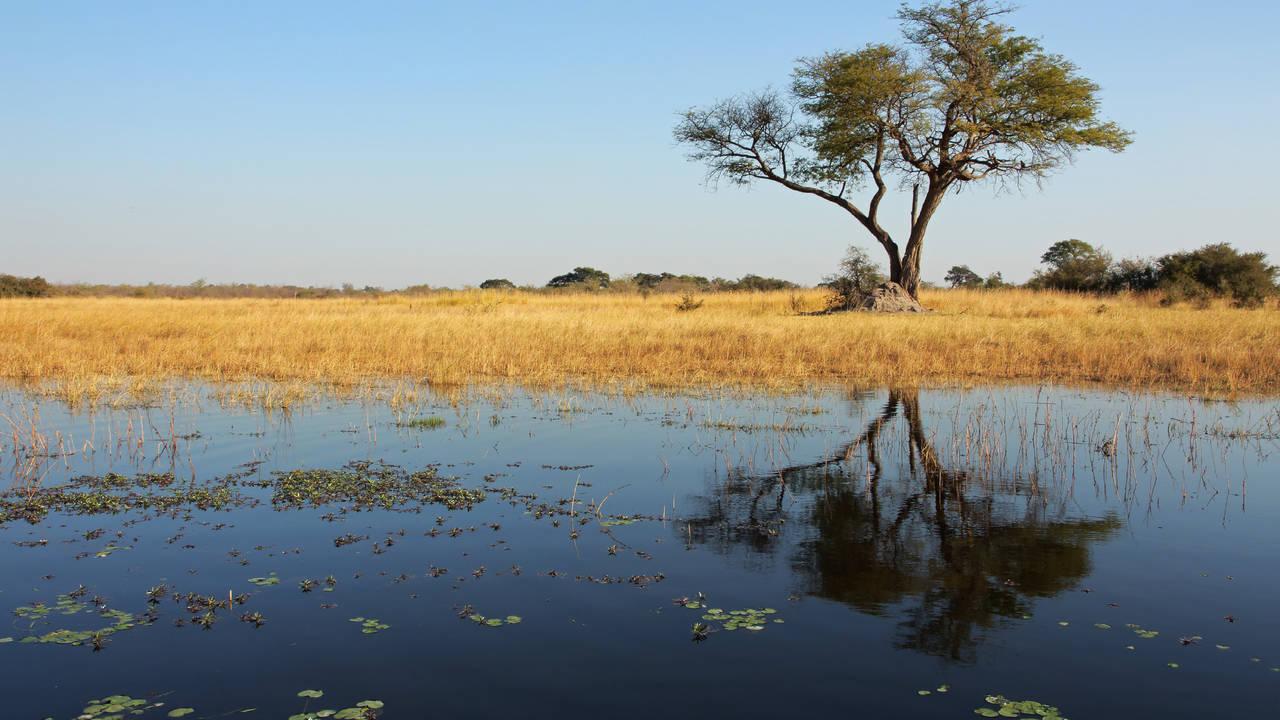 Kwando rivier in de Caprivistrook in Namibie