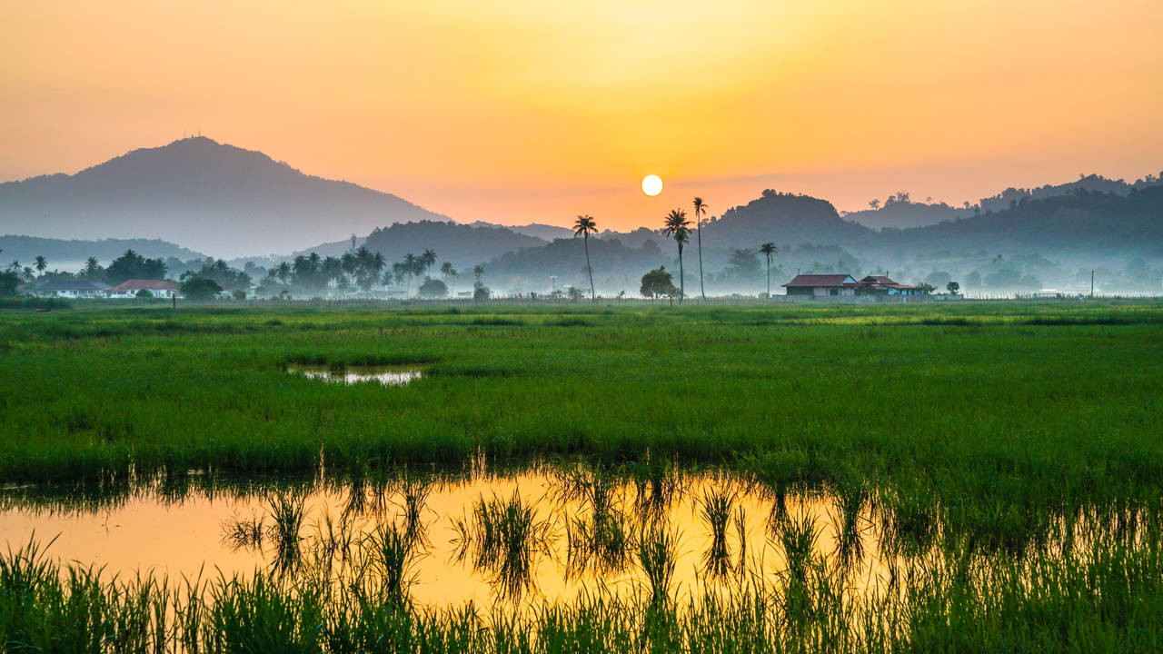 Rijstvelden op Langkawi