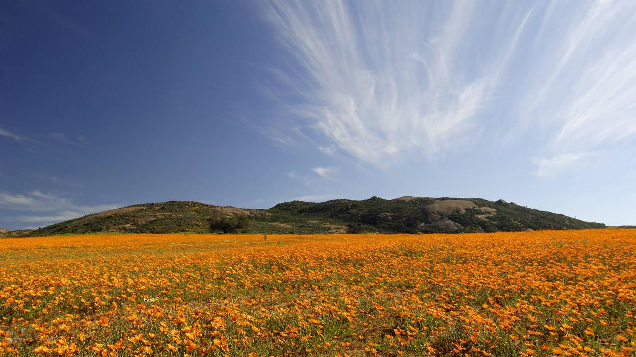 Namaqualand in Zuid-Afrika