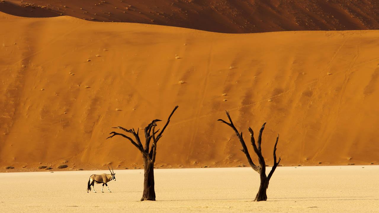 Een oryx in Deadvlei in Namibie