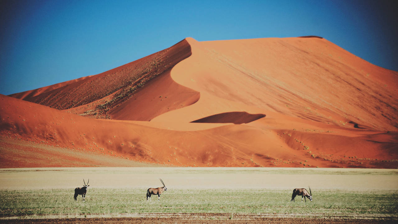 Oryx, Namib Naukluft National Park