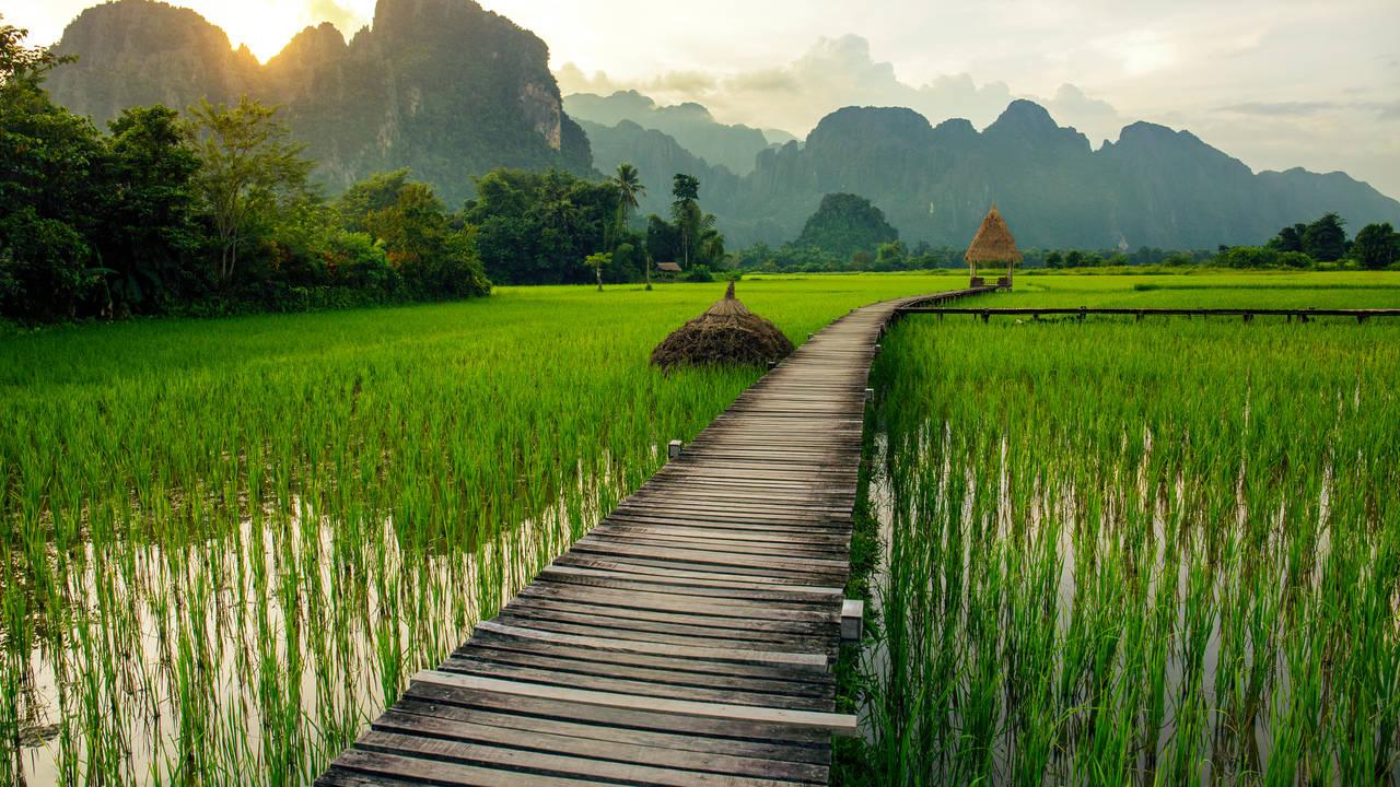Rijstvelden bij Vang Vieng