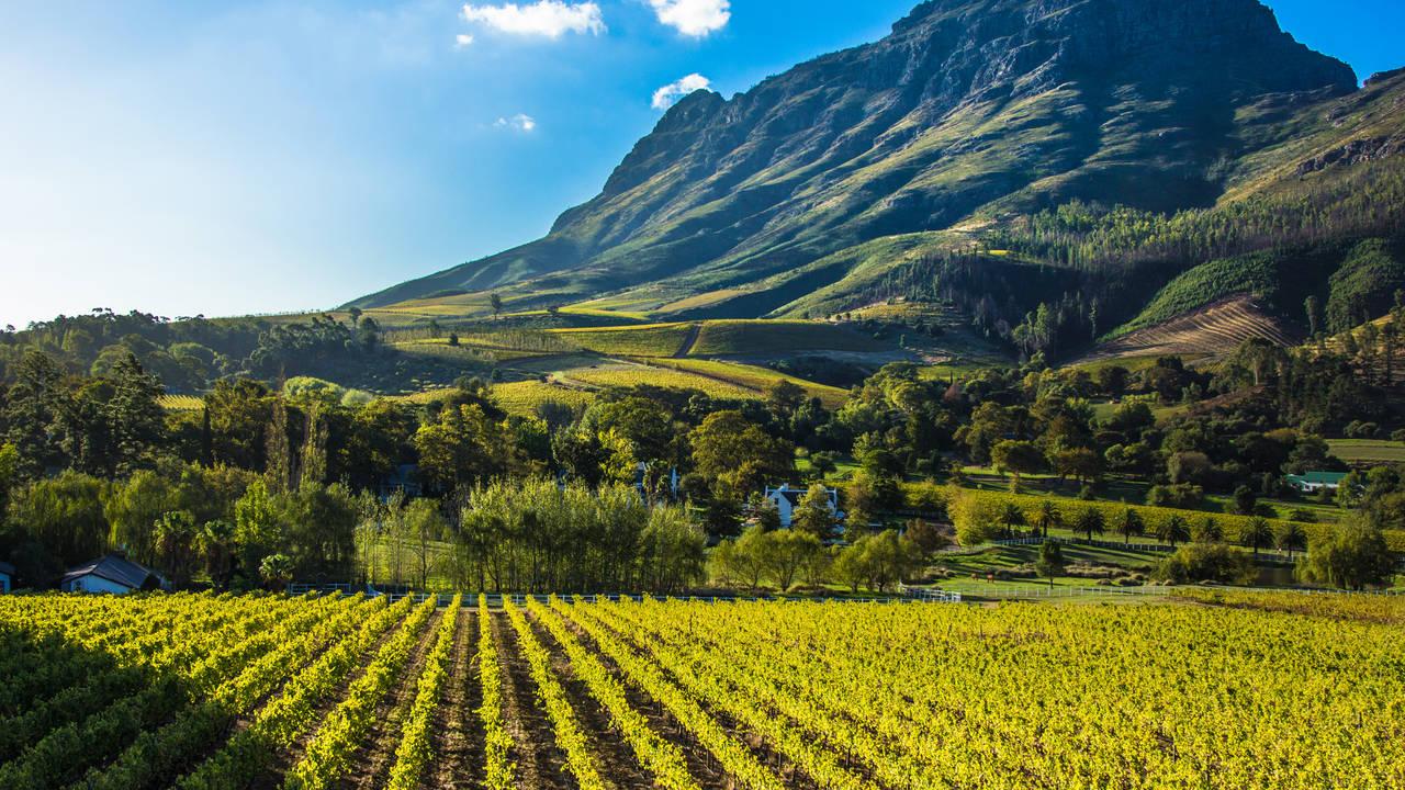 Wijngaarden in Stellenbosch