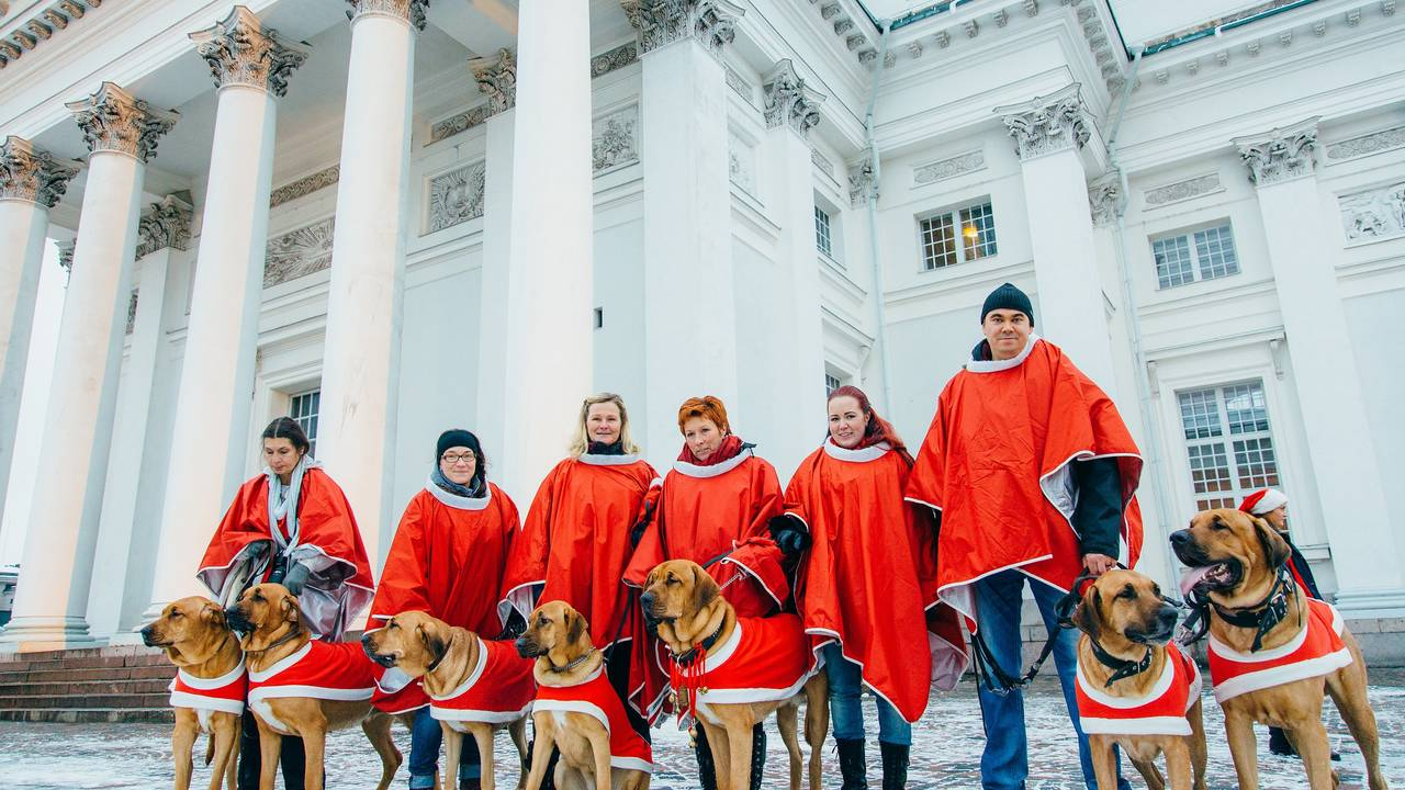 Honden in Helsinki