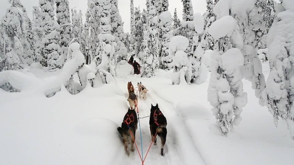 Husky tocht, Fins Lapland