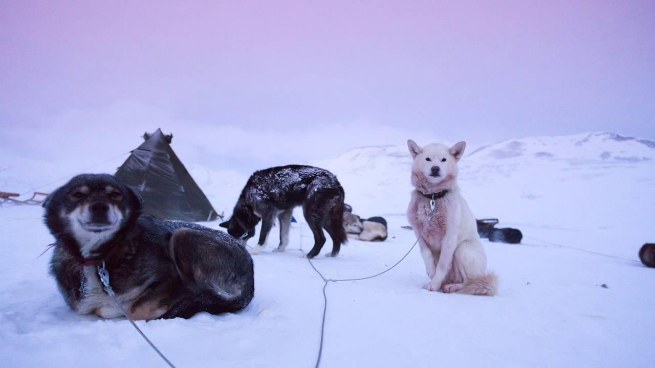 Hondensleetocht op Spitsbergen