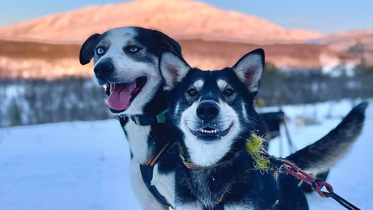 Hondenslee tocht in Tromsø