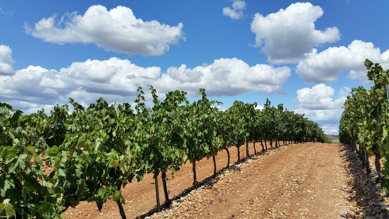 Wijngaard in La Rioja