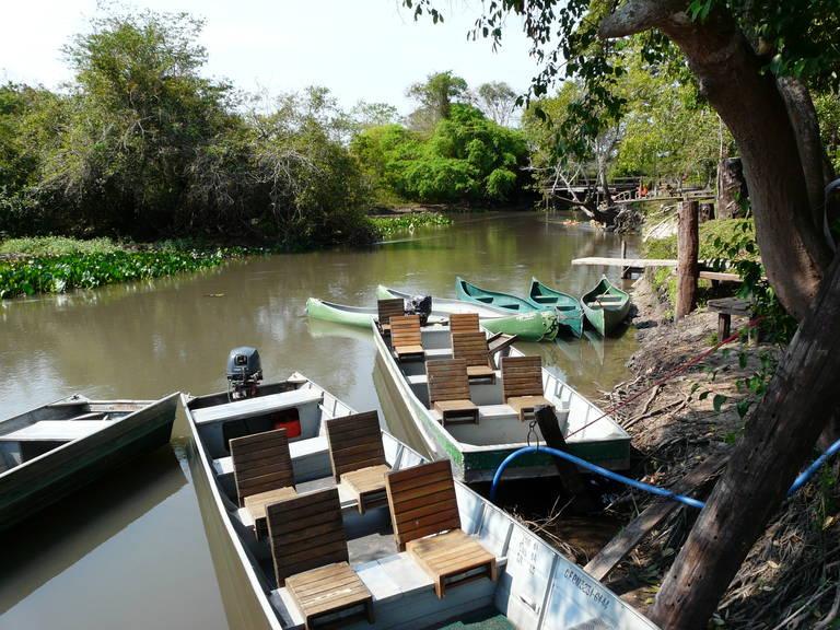 De oever van Rio de Salobra, Pantanal