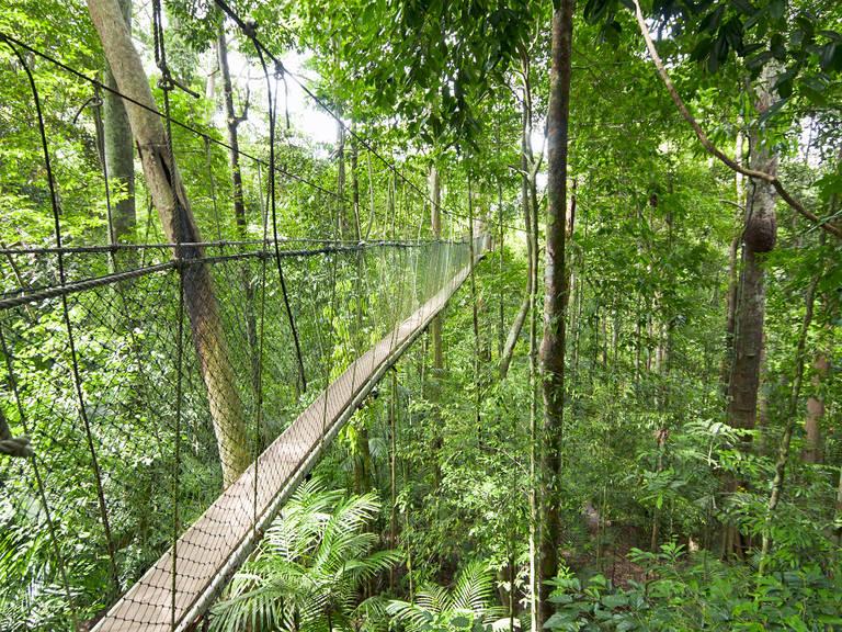 Canopy Walk, Teman Negara, West-Maleisië