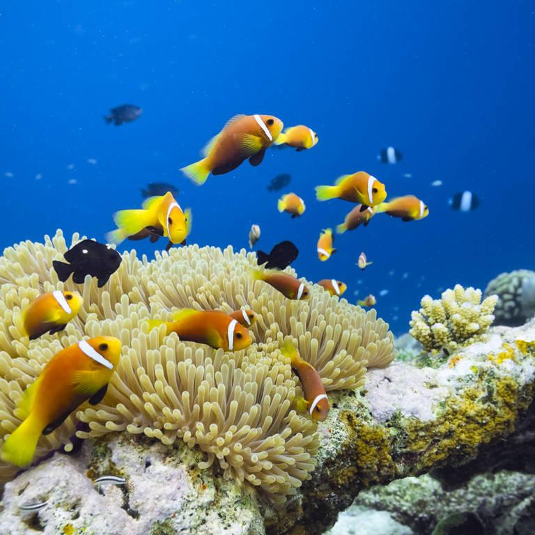Onderwaterwereld Seychellen