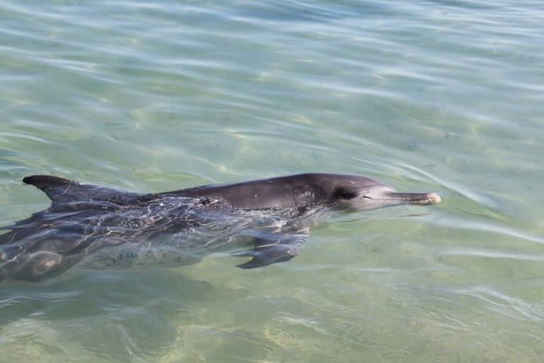 Dolfijn, Monkey Mia