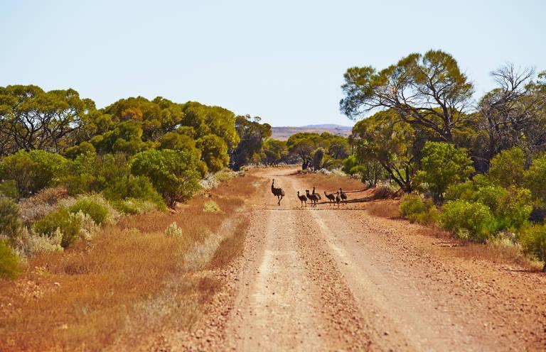 Emoes op de weg