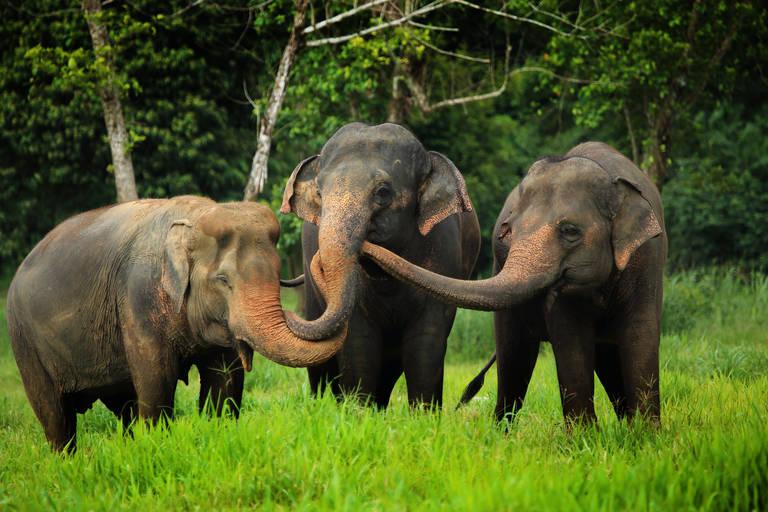 Olifanten bij Elephant Hills