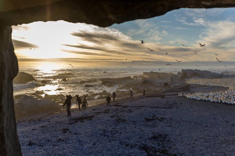 Vogels en strand in Lambertsbaai